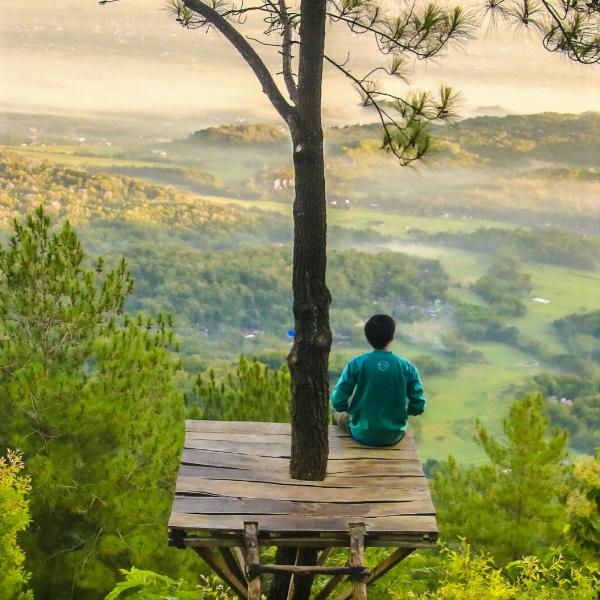 donosno-zgodbarjenje-posadite-drevo